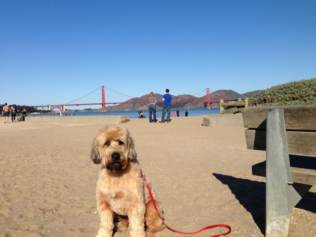 Yes, I had a walk at Crissy Field the morning of Saturday, Oct 5, 2013, even though the Golden Gate National Recreation Area was Closed because of the partial Federal government shutdown!  Man, what a beautiful day!